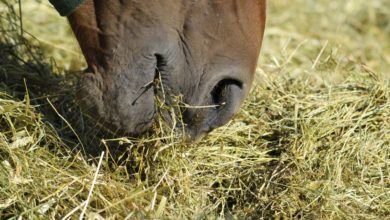 Fall Transition & Chronic Colic Tips